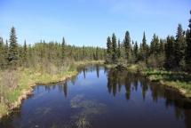 03_Wnętrze alaskańskiej tajgi (fot. Sebastian R. Bielak)